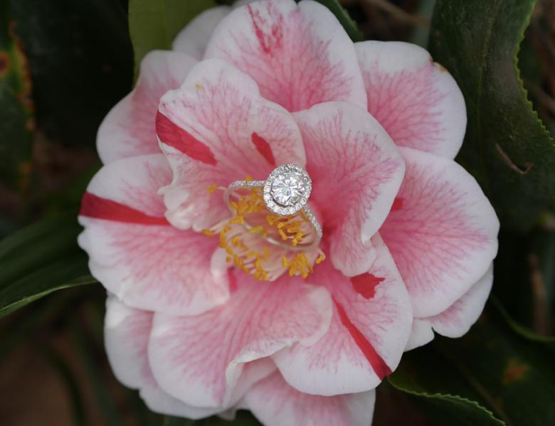 Oval Halo Moissanite Engagement